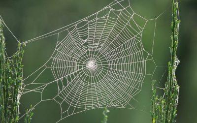 Intern Linkbuilding verbeteren met Yrwebsite